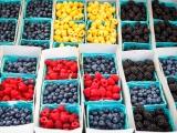 Eco-Food Revolution